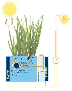 Plant-e system - Energie-opwekkende plant op Hembrugterrein